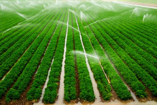 Irrigation Equipment「Sprinkler watering bell pepper field, elevated view」:スマホ壁紙(19)
