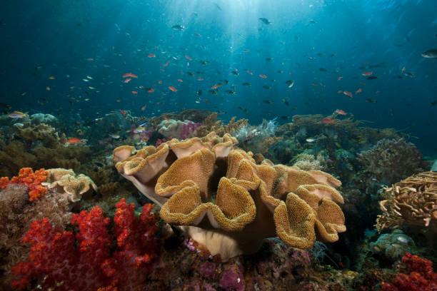 Mushroom Soft Coral in Reef, Indonesia:スマホ壁紙(壁紙.com)