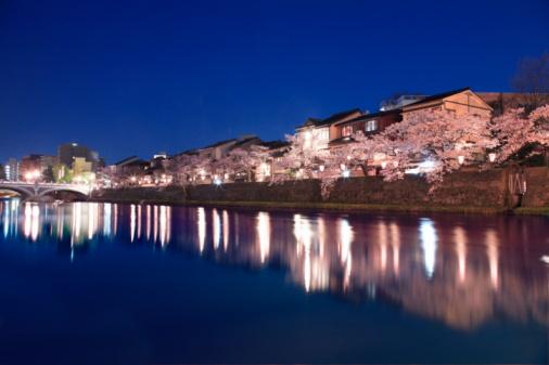 夜桜「Asano River and Cherry Blossoms」:スマホ壁紙(6)