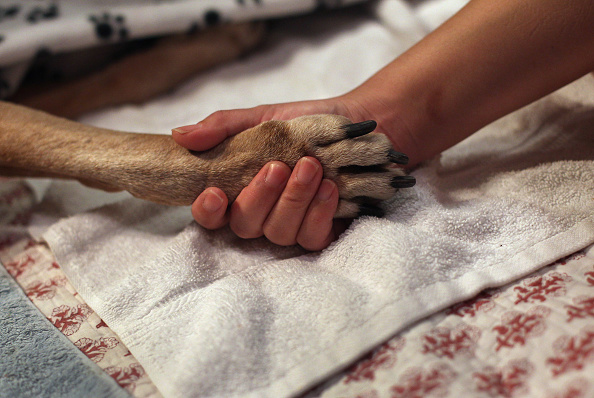 犬「Veterinarian Makes Home Visits To Euthanize Dying Pets」:写真・画像(4)[壁紙.com]