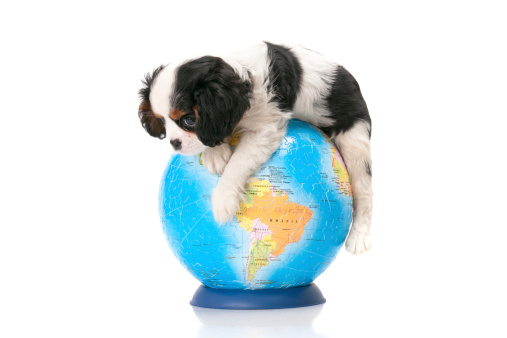 Dog Coat「dog and world」:スマホ壁紙(6)