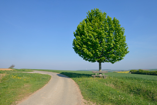 Single Tree「Rural road with solitude tree with bench (Acer platanoides / Norway maple).」:スマホ壁紙(11)