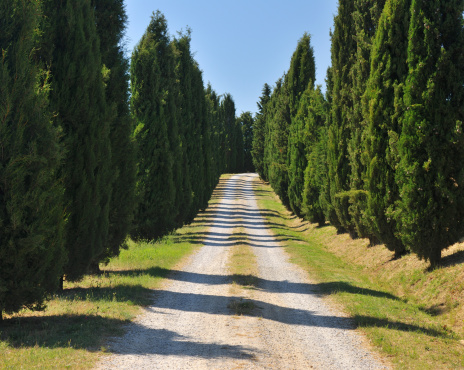 Tuscany「Rural Road lined with Cypress Trees」:スマホ壁紙(18)