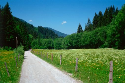 Country Road「Rural road through field」:スマホ壁紙(10)