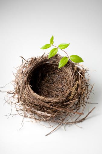 鳥の巣「巣、グリーンの小枝」:スマホ壁紙(1)