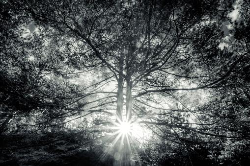 High Dynamic Range Imaging「Inside the forest」:スマホ壁紙(0)