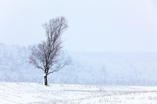 アディロンダック森林保護区「樹木は、冬期にスノーブリザード田舎に潜む凍ったフィールド」:スマホ壁紙(0)