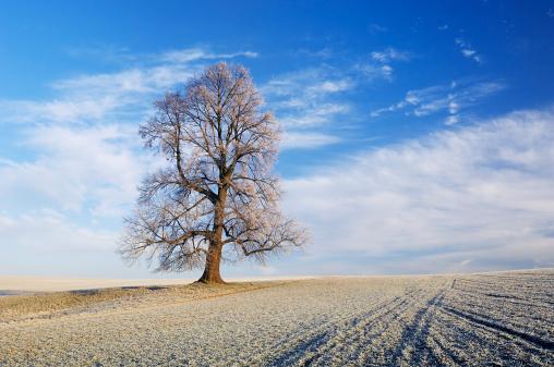 Loneliness「Tree in winter 」:スマホ壁紙(6)