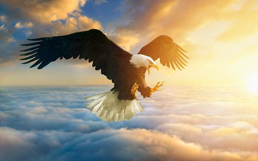 Hawk - Bird「Fierce eagle flying in sunset sky」:スマホ壁紙(18)