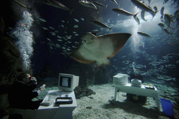 Toilet「Underwater Office Demonstrates Water Wastage At Work」:写真・画像(7)[壁紙.com]