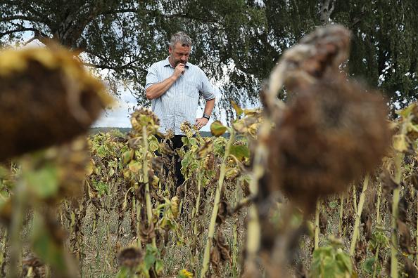 ひまわり「Government Considers Aid To Drought-Affected Farmers」:写真・画像(19)[壁紙.com]
