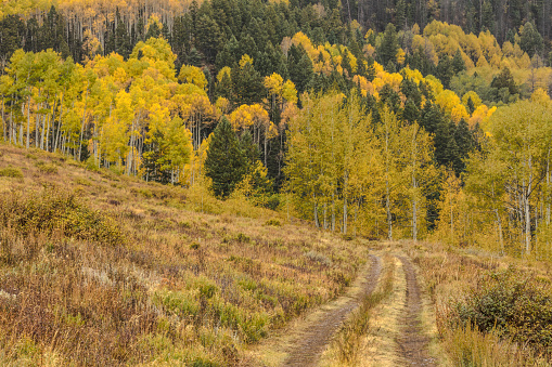 Uncompahgre National Forest「Tire tracks across meadow in the mountains」:スマホ壁紙(13)