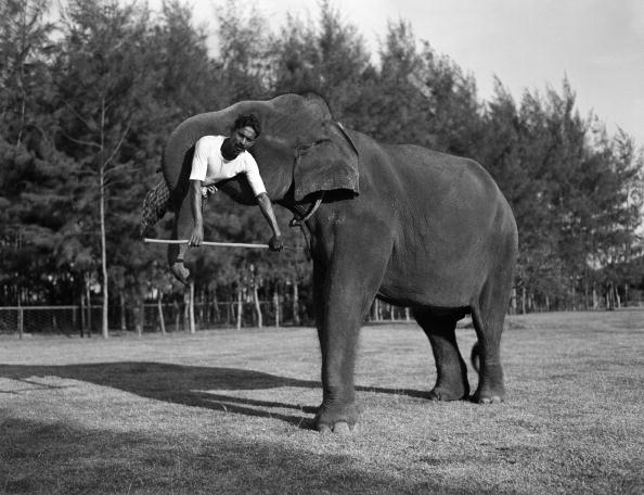 Charles Phelps Cushing「Elephant lift」:写真・画像(11)[壁紙.com]