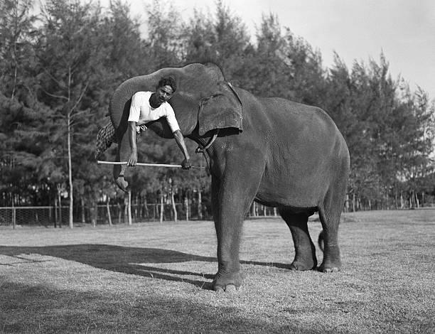 Elephant lift:ニュース(壁紙.com)