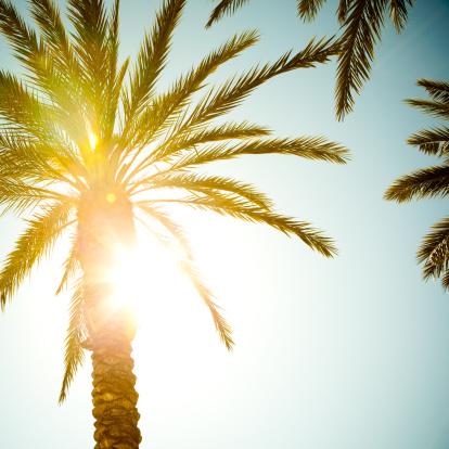 Sunbeam「Sunbeam coming through palm tree leaves」:スマホ壁紙(18)