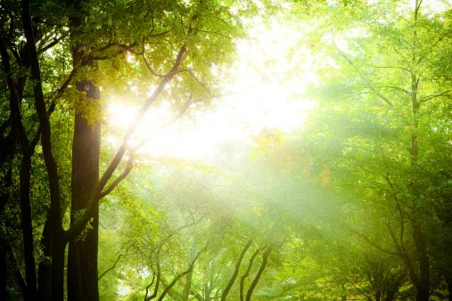 春「太陽光線の中での木の枝」:スマホ壁紙(18)