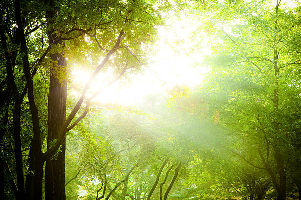 Sunbeam coming through tree branches:スマホ壁紙(壁紙.com)