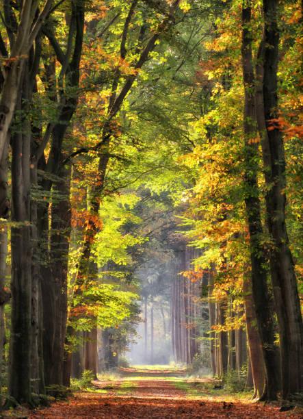 Majestic avenues in autumn leaf colors:スマホ壁紙(壁紙.com)