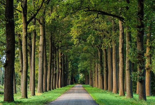 Avenue「Majestic avenues in autumn leaf colors」:スマホ壁紙(6)