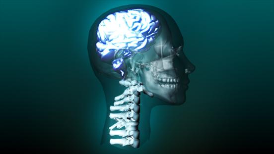 Cerebellum「highly detailed animation of a human brain」:スマホ壁紙(18)