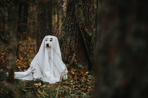 ハロウィン おばけ「ハロウィーンのための犬のゴースト」:スマホ壁紙(14)