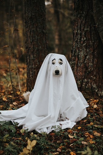 Unrecognizable Person「dog ghost for halloween」:スマホ壁紙(1)