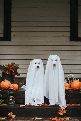 Halloween ghost「dog ghost for halloween」:スマホ壁紙(12)