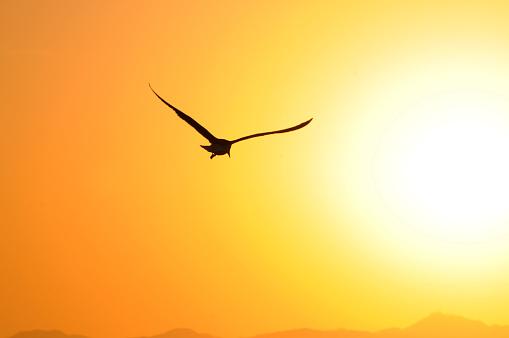 Seagull「Seagull Flight at Sunset Venice Beach California」:スマホ壁紙(7)