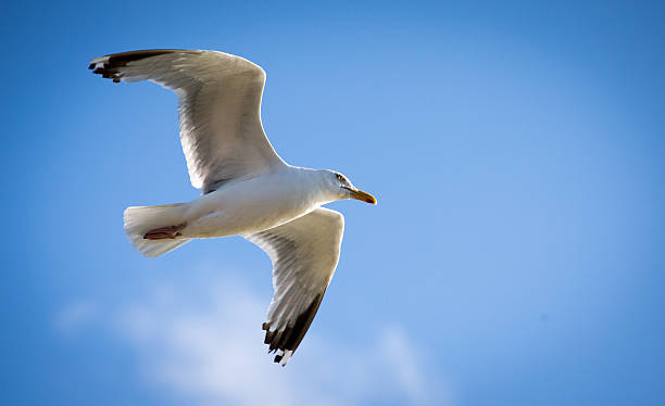 Seagull Attacks Being Reported From Coastal Towns This Summer:ニュース(壁紙.com)