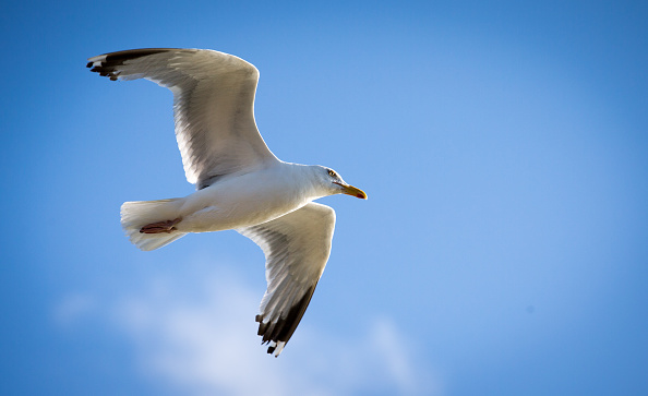Horizontal「Seagull Attacks Being Reported From Coastal Towns This Summer」:写真・画像(2)[壁紙.com]