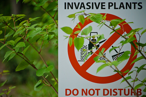 Uncultivated「Japanese Knotweed partially covers an invasive plant sign.」:スマホ壁紙(0)
