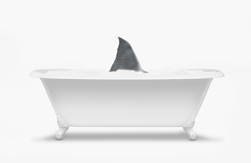 Shark「Fin of shark swimming in bathtub」:スマホ壁紙(1)