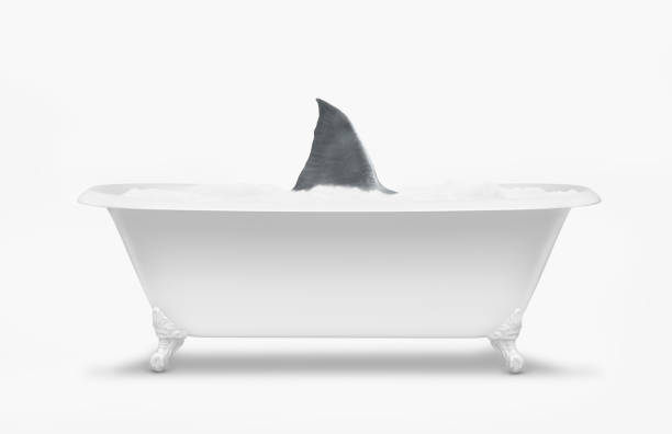 Fin of shark swimming in bathtub:スマホ壁紙(壁紙.com)
