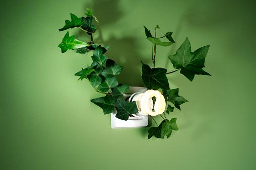 Biomass - Ecological Concept「Ivy around energy saving light bulb」:スマホ壁紙(12)