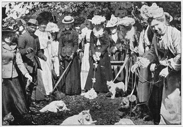 ヒューマンインタレスト「Judging cats at the Royal Botanic Gardens show, Kew, London, c1900 (1901)」:写真・画像(9)[壁紙.com]