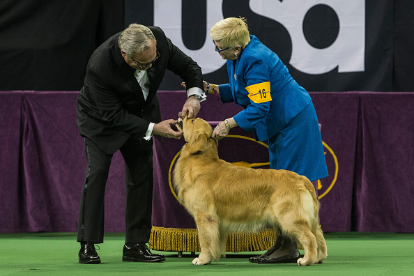 Andrew Burton「Dogs Compete In The 139th Annual Westminster Kennel Club Dog Show」:写真・画像(12)[壁紙.com]