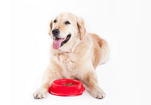 Eating「Golden Retriever with dog food」:スマホ壁紙(7)