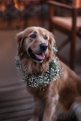 Crown - Headwear「Golden Retriever dog in a flower crown」:スマホ壁紙(4)