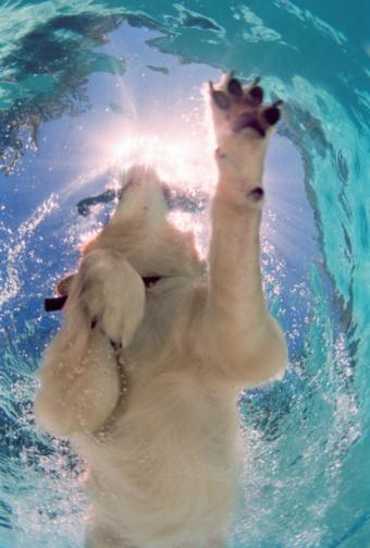 Effort「Golden retriever swimming in pool, underwater view」:スマホ壁紙(11)