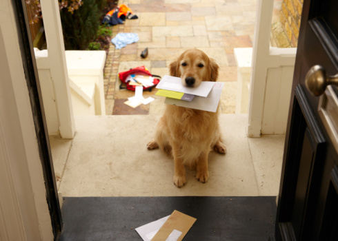 Animal Themes「Golden retriever dog sitting at front door with letters in mouth」:スマホ壁紙(5)