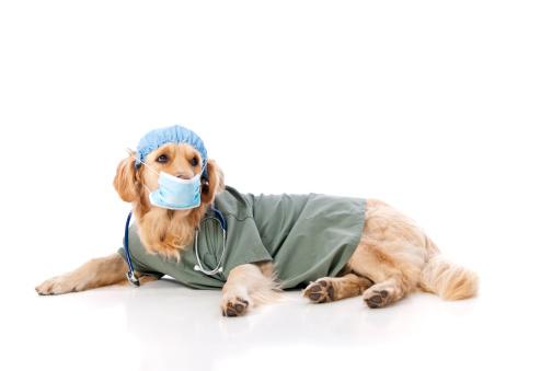 Medical Scrubs「Golden Retriever Doctor」:スマホ壁紙(19)