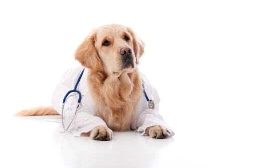 Veterinarian「Golden Retriever Doctor」:スマホ壁紙(3)