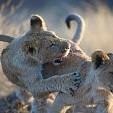 動物の赤ちゃん壁紙の画像(壁紙.com)