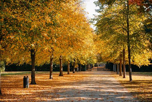秋「Treelined footpath in a park, Berlin, Germany」:スマホ壁紙(18)