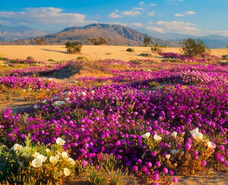 Arid Climate「Spring In California Desert」:スマホ壁紙(18)