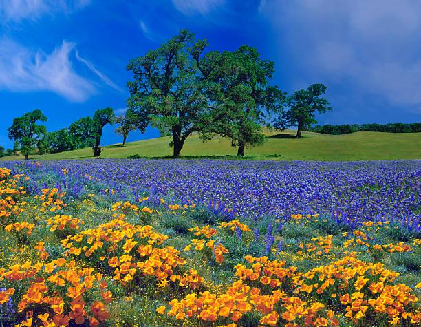 Spring In California:スマホ壁紙(壁紙.com)