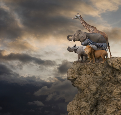 Giraffe「African Animals On The Edge Of A Cliff」:スマホ壁紙(2)