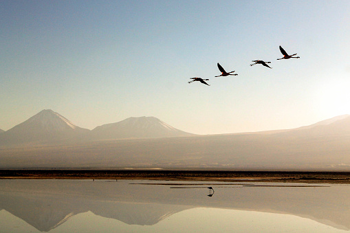 San Pedro De Atacama「Flamingos flying over a lake in the desert of the  ...」:スマホ壁紙(5)
