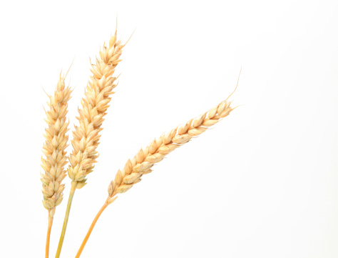 Whole Wheat「Three stems of wheat on a white background.」:スマホ壁紙(14)