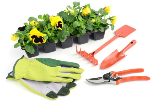 Planting「yellow pansy in flowerpot with gardening tools」:スマホ壁紙(12)